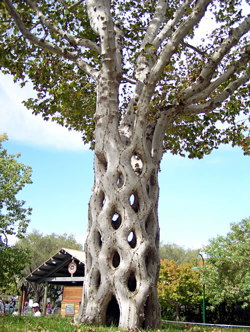 basket-tree