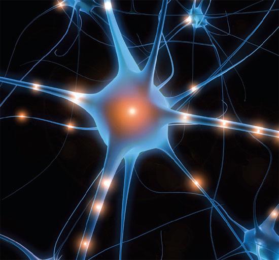brain02